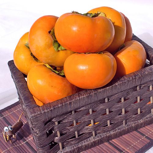 秋の贅沢 【予約】伊豆柿 2L(5kg)