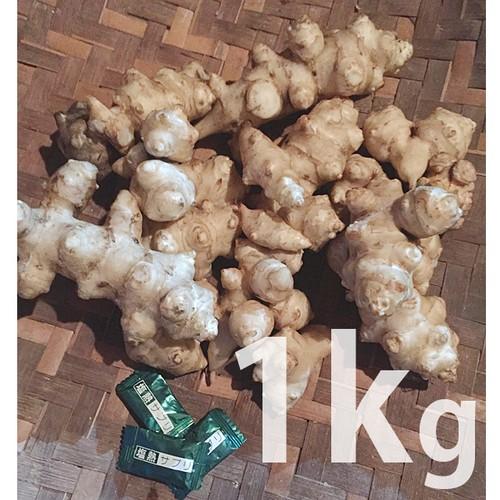 キクイモ 1kg