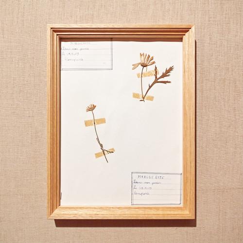植物標本フレーム 1969 フランスビンテージ 19FEB-VSHF11
