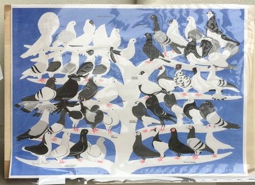 鳩のリソグラフポスター
