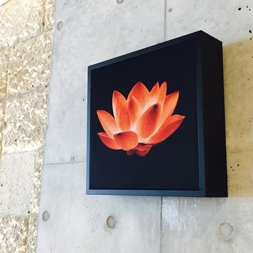 XP125-W (Lotus Flower)