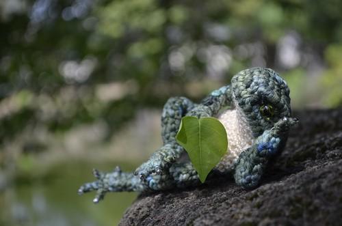 木陰のカエル
