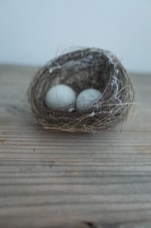 鳥の巣   1