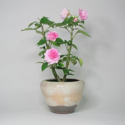 ミニ鉢カバー 陶器(信楽焼)製【SO-9517】