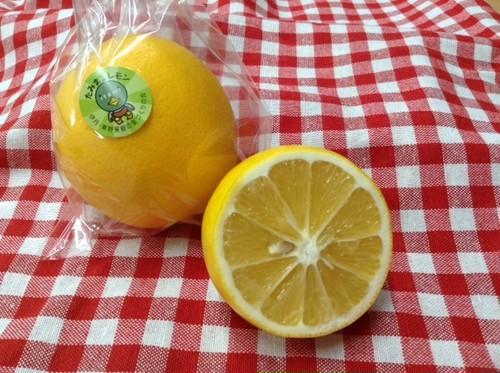 たみまるレモン1kg(Mサイズ~Lサイズ)