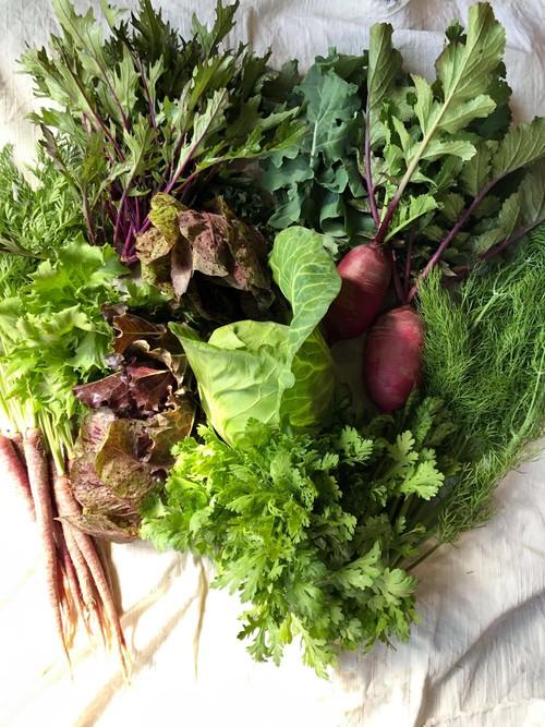 Vegeta屋お試し野菜セットM(春・夏)