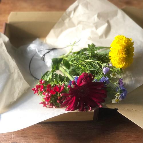 お家で楽しむ花(5-7種類程度)