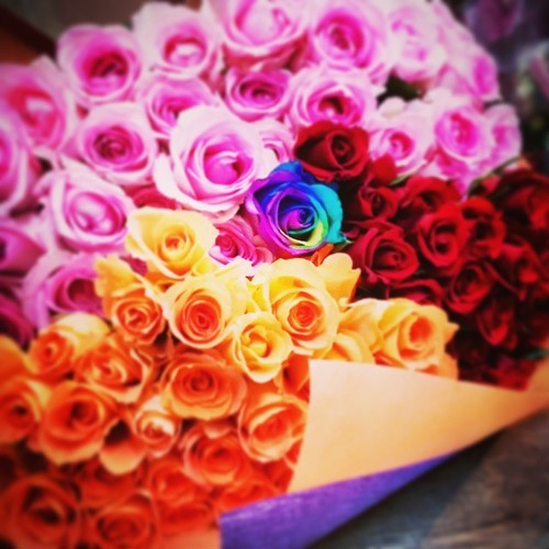 100Roses with Rainbow
