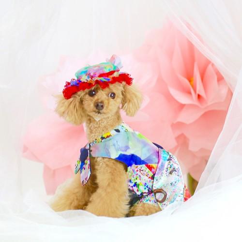 jibun-fuku DOG 【スカート・チューブドレス】DOGBSK201818_ML