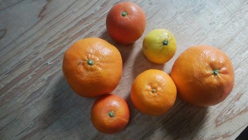季節の柑橘詰め合わせ【5kg】
