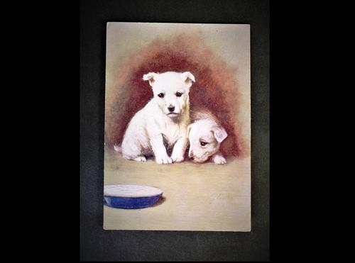 イギリス アンティークポストカード 犬の絵 絵葉書 The West Highland White Terrier テリア