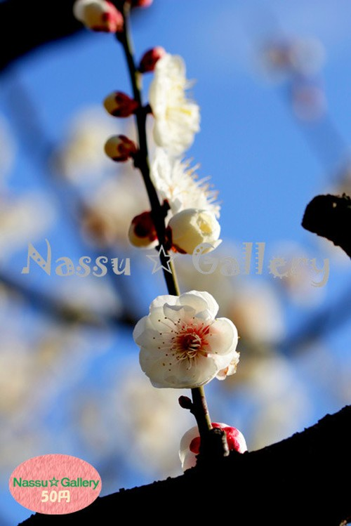 青葉の梅林2~Plum grove~④