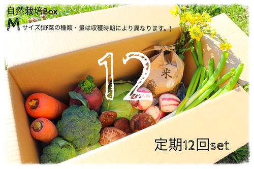 【定期12回分~毎週or隔週~】自然栽培Box Mサイズ【二回目以降の発送代込】
