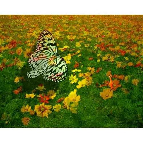蝶と精霊・25