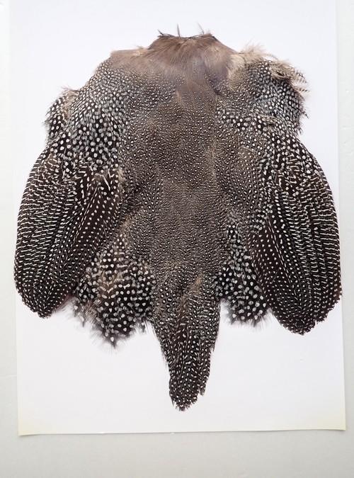【 再入荷 】Guinea Fowl Complete Skin / ギニアフォール COMP. スキン