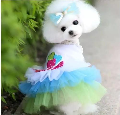 【アウトレット】★かわいい犬服ワンピ/ドレス  The three hearts tutu  dress