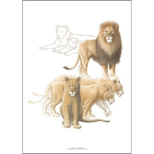 アート ポスター A4 サイズ KOUSTRUP & CO. - Lion ライオン
