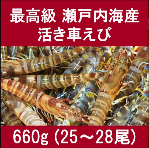 生名車えび (活き)660g(25~28尾)