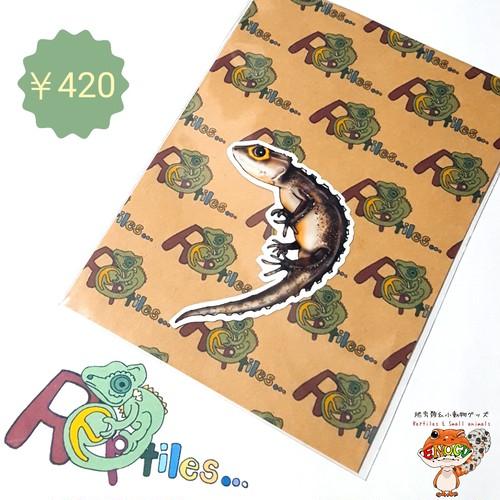 [アカメカブトトカゲ]爬虫類ステッカー