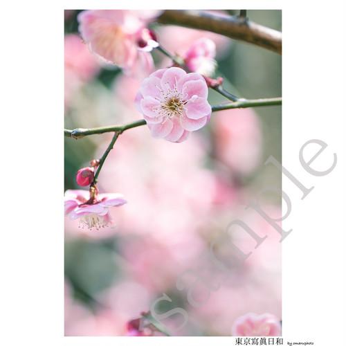 「梅の花」2Lサイズ