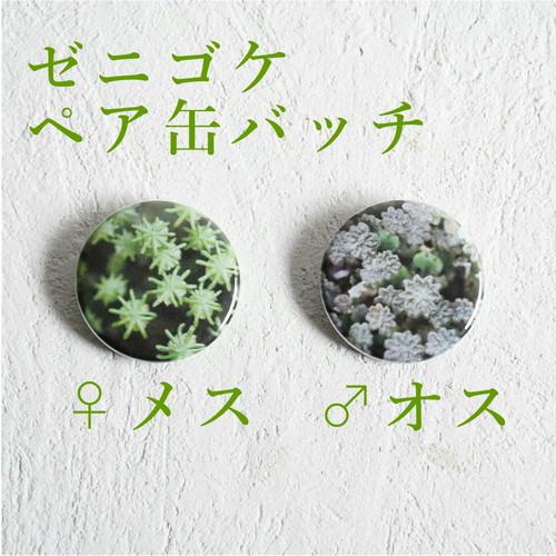 【デザイングッズ】ゼニゴケ ペア苔缶バッジ