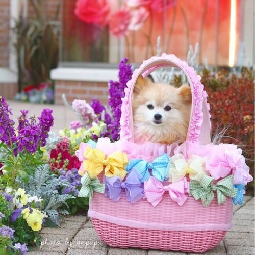 4kg迄サイズ ドッグキャリー リボン付きカゴバッグ ♡おんぷちゃんのメルヘンピンク♡