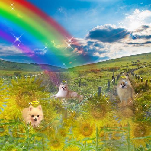 【4頭】デジタル合成フォト「虹の橋・あの子がいる世界」薄手クリアファイル&シール&額縁入りカラーコピーセット