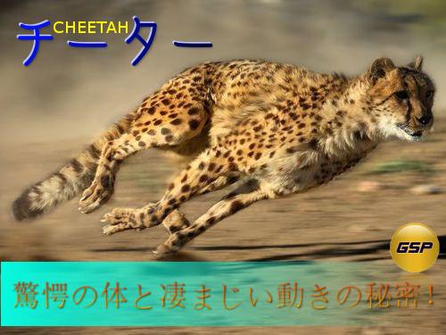 チーター:その驚愕の体と凄まじい運動能力の秘密:二足動物にも応用できる体の動かし方を学ぼう!