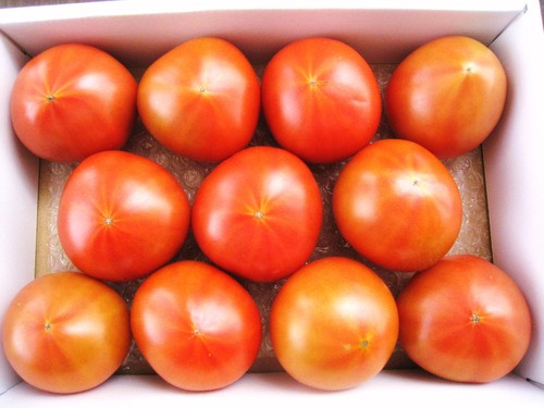 こだわりのトマト「ぜいたくトマト」 化粧箱1Kg×3箱