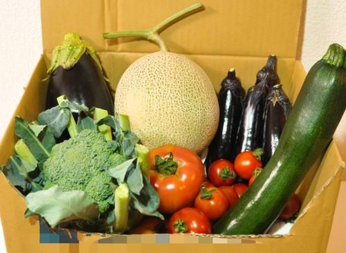 野菜セット M サイズ