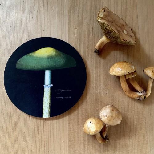 コースター 白樺 木製 1枚 KOUSTRUP & CO. - Mushrooms マッシュルーム