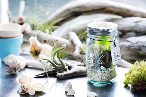 URBAN GREEN MAKERS(アーバングリーンメーカーズ)TERRARIUM KIT テラリウムキット(03 VINTAGE GLASS JAR)