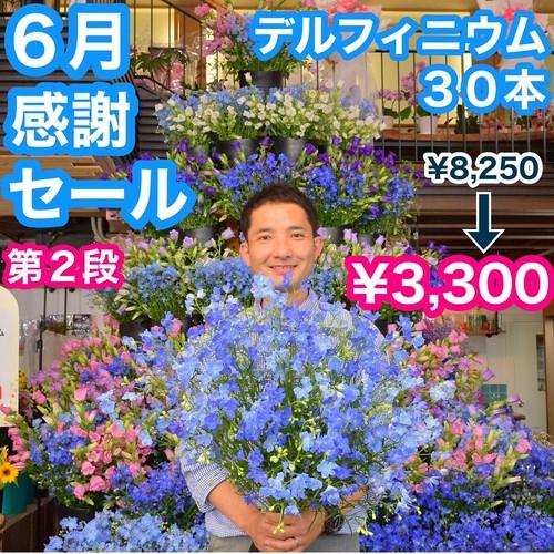 1000輪‼️ デルフィーニュウム 30本 爽やかなアルプスの花