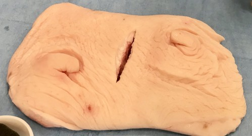 Wet lab シリーズ 豚皮膚モデル ラージサイズ(衛生検査済)