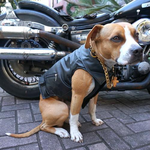 DOGGY BRO.(ドギーブロ) ライダースジャケット【ブラックS〜XLサイズ】