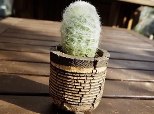 幻楽×信楽焼鉢