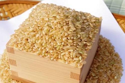 玄米10kg 新潟県認証特別栽培米 平成30年産新潟県しただ産コシヒカリ