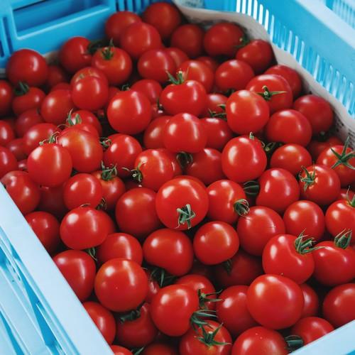 「おもいろトマト」 生トマト 1箱(約1.0kg)