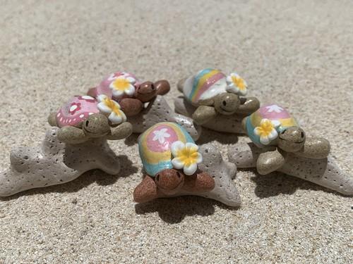 サンゴとかめ吉たち
