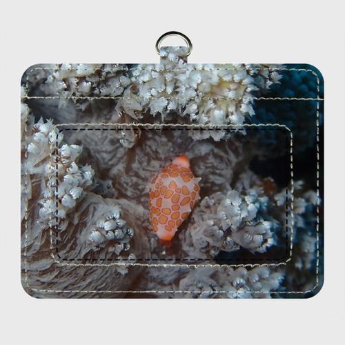 海の中のパスケース オレンジウミウシ