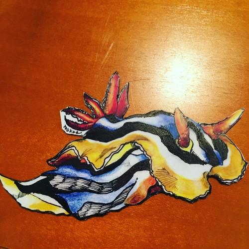 【ウミウシマグネット】クロモドーリスクアドリカラー10cm