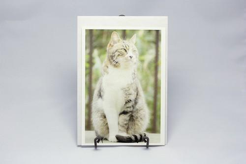 ポストカード封筒付き*ネコD