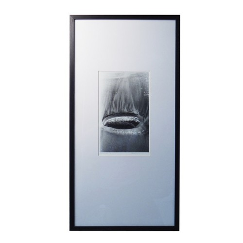 Photograph W/Frame