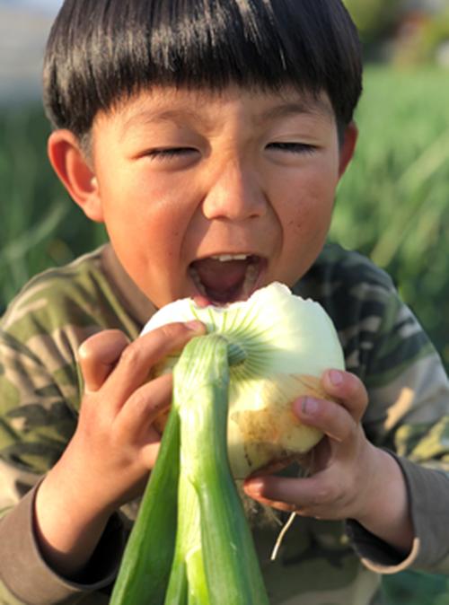 【産地直送便】大阪・なにわの伝統野菜『泉州黄玉葱』5㎏