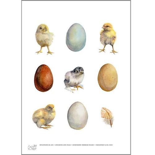 アート ポスター A4 サイズ KOUSTRUP & CO. - Eggs, chickens and feather たまご・ひよこ・羽毛