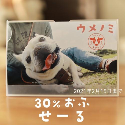 フレンチブルドッグこうめさんとの暮らし:うめのみカレンダー2021