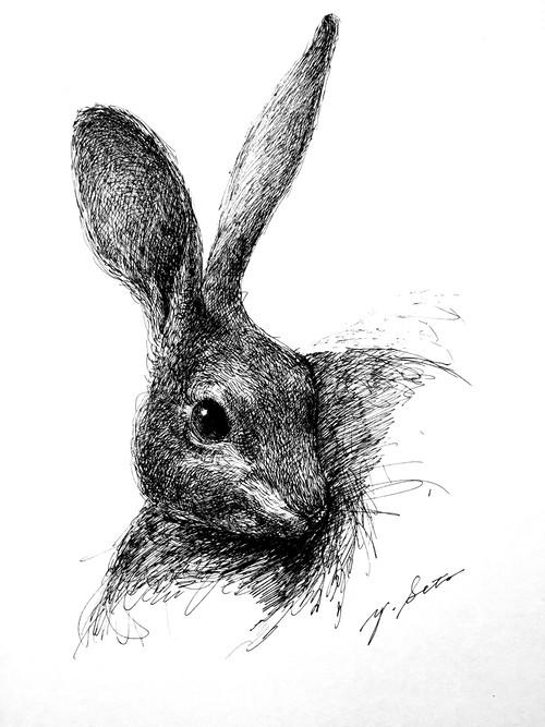 瀬戸優 ドローイング-ウサギ-