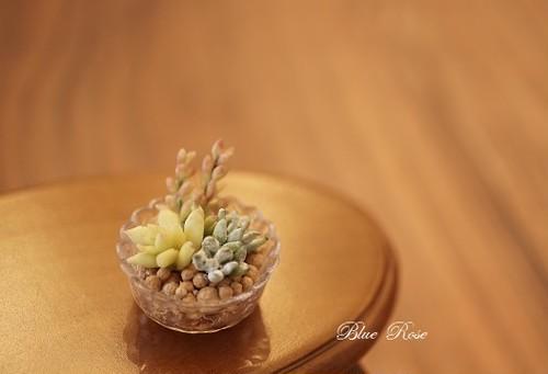 樹脂粘土のミニチュア多肉植物