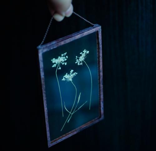 植物絵画:ドライフラワー/押し花『レースフラワー』a