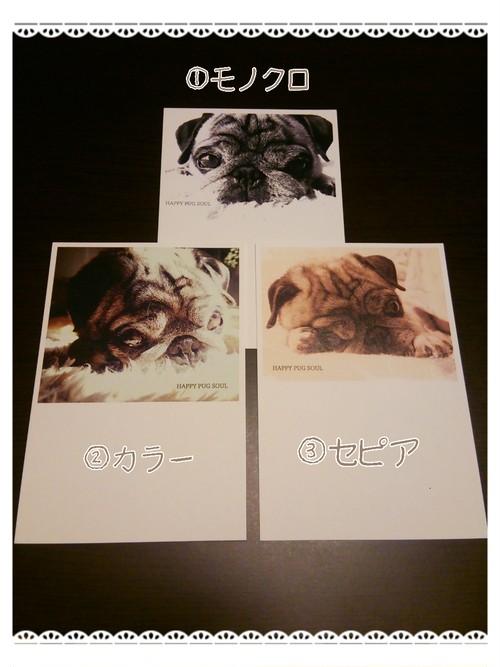 ポストカード 【HAPPY PUG SOUL】